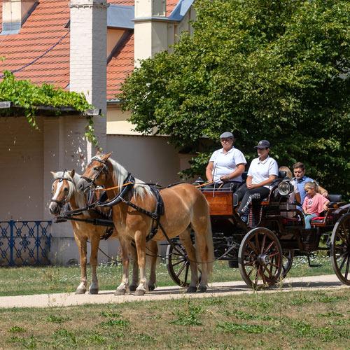 Kutschfahrt im Branitzer Park