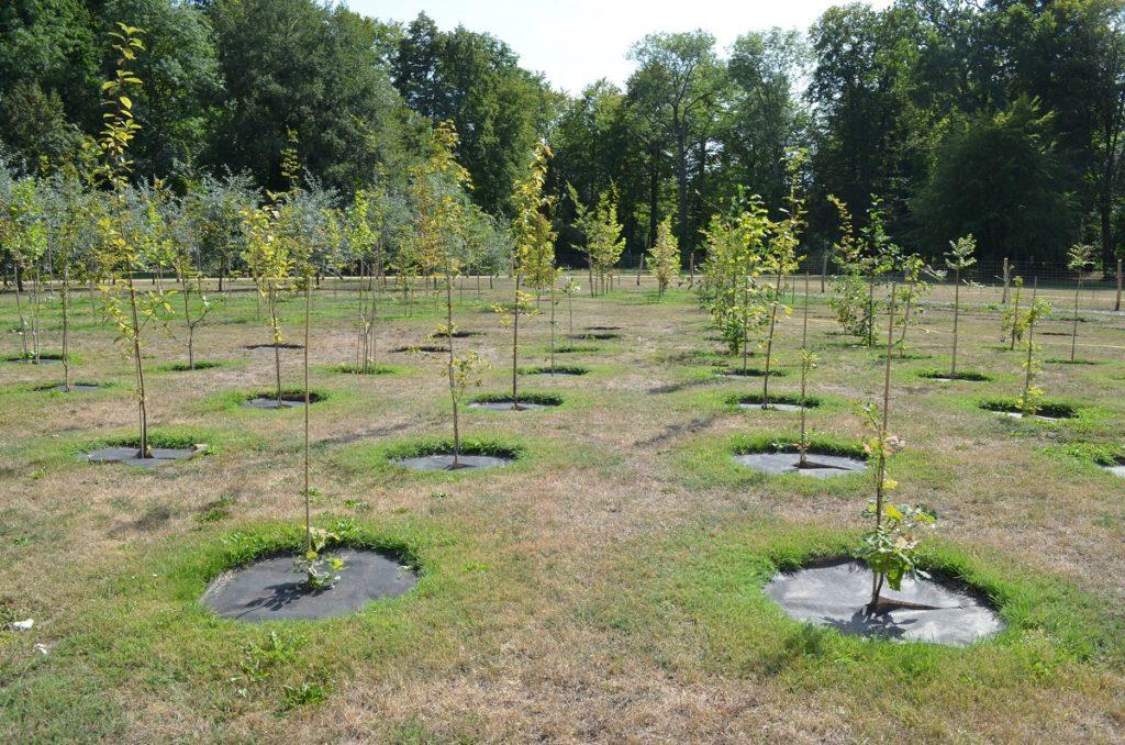 junge Bäume in der Baumuniversität im Branitzer Park